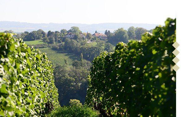 cta-vignerons-vignobles